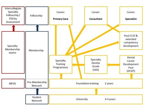 career path of a surgeon Becoming a surgeon requires extensive medical training, but it also requires   surgeons can take this opportunity to explore whether this career path will be a.