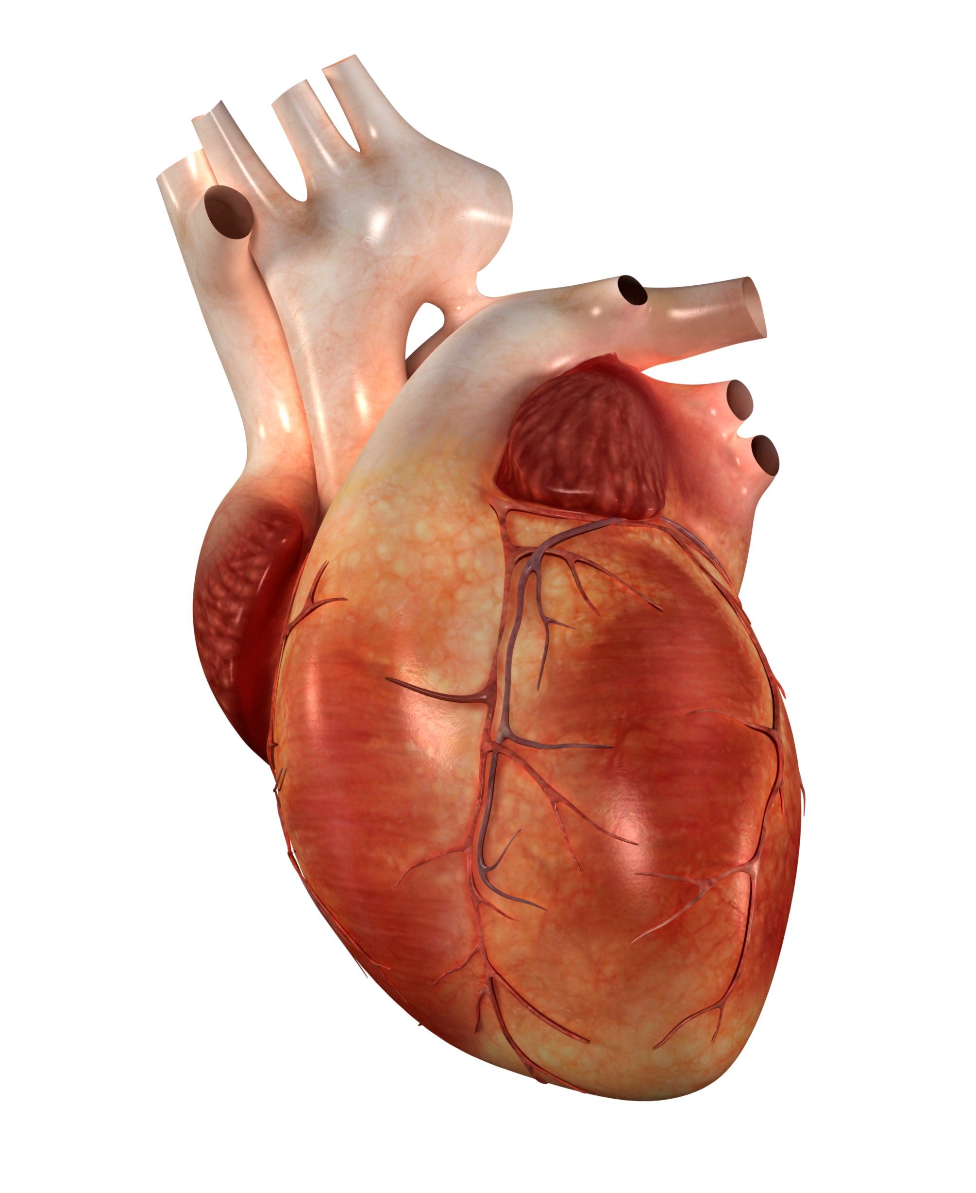 Understanding Children's Heart Surgery Outcomes - Read more